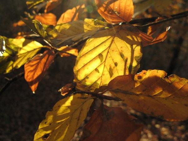 falling leaves2