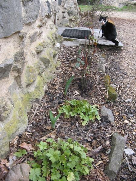 green shoots1