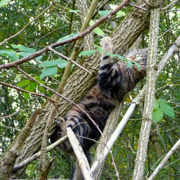 Jess in a tree