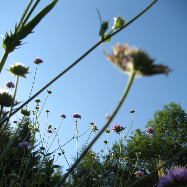 silver seed heads2