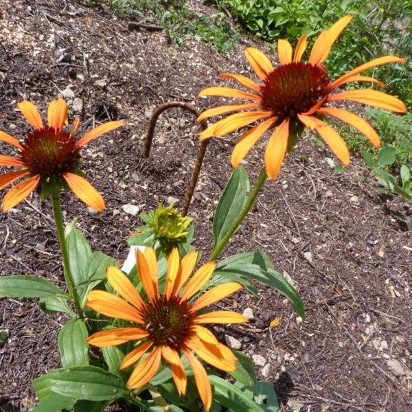 thru the flowers2