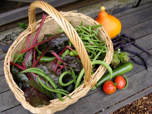 ww harvest