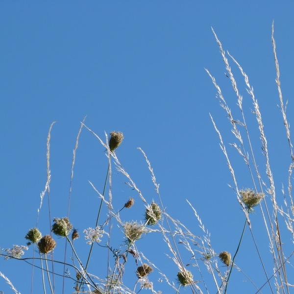 ww seed heads and grass