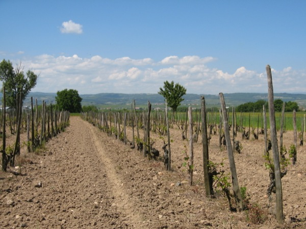 ww vines