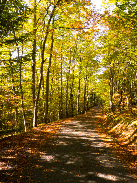 beech trees near Grahy