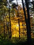 woods around Grahy