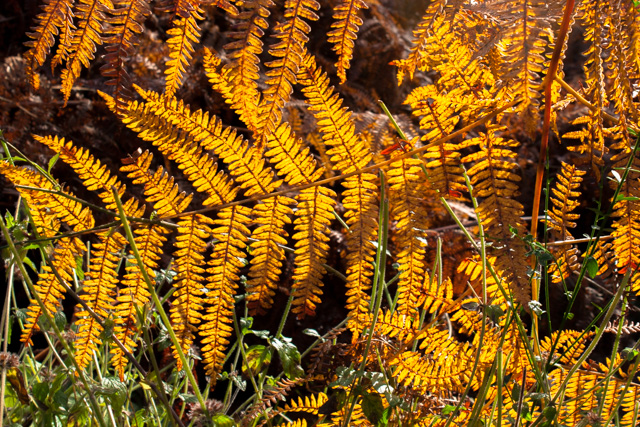 winter bracken