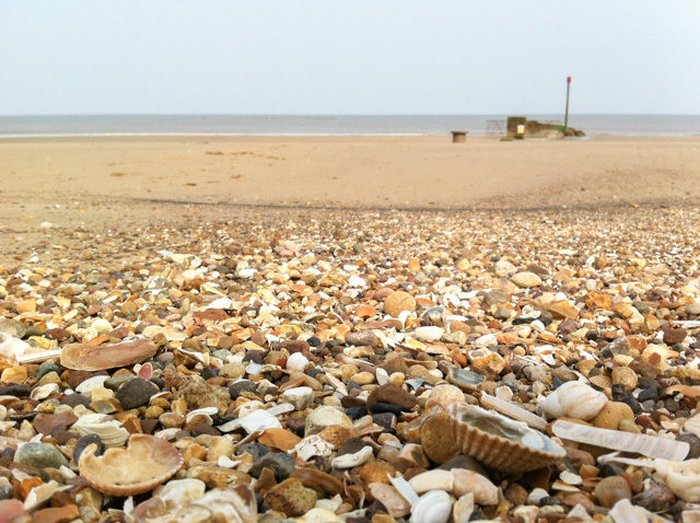 Seashells, Lincolnshire coast