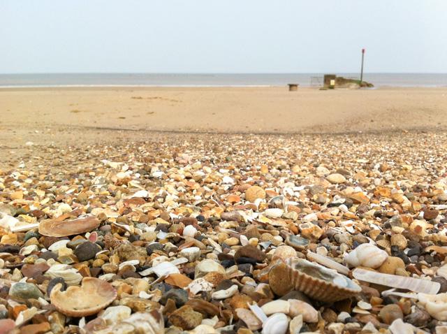 Seashells, Lincolnshire coast
