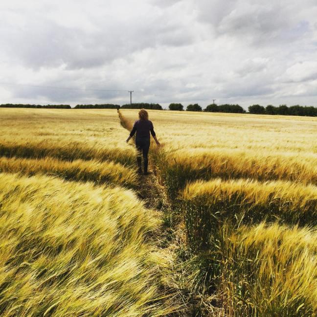 walking the wheat fields by Phil Marsh