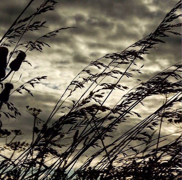 Grasses on the East Durham coast by David Fay
