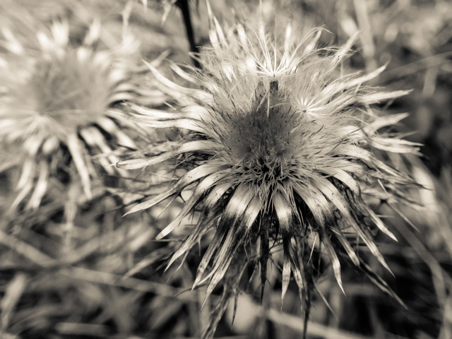 winter seed heads