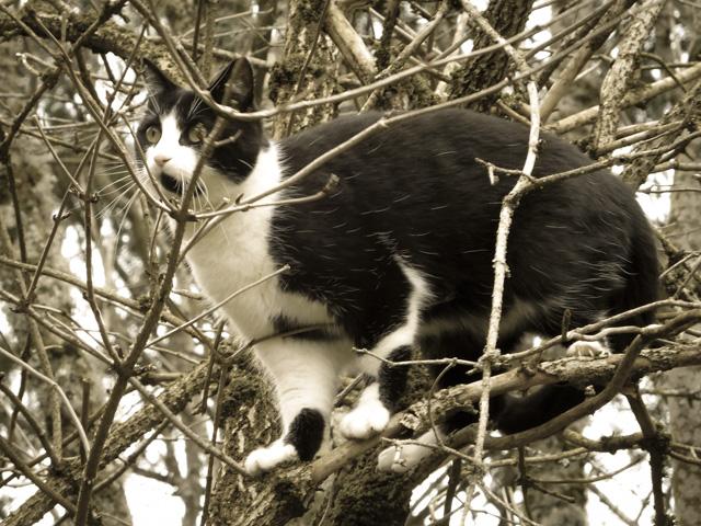 sophie tree climbing
