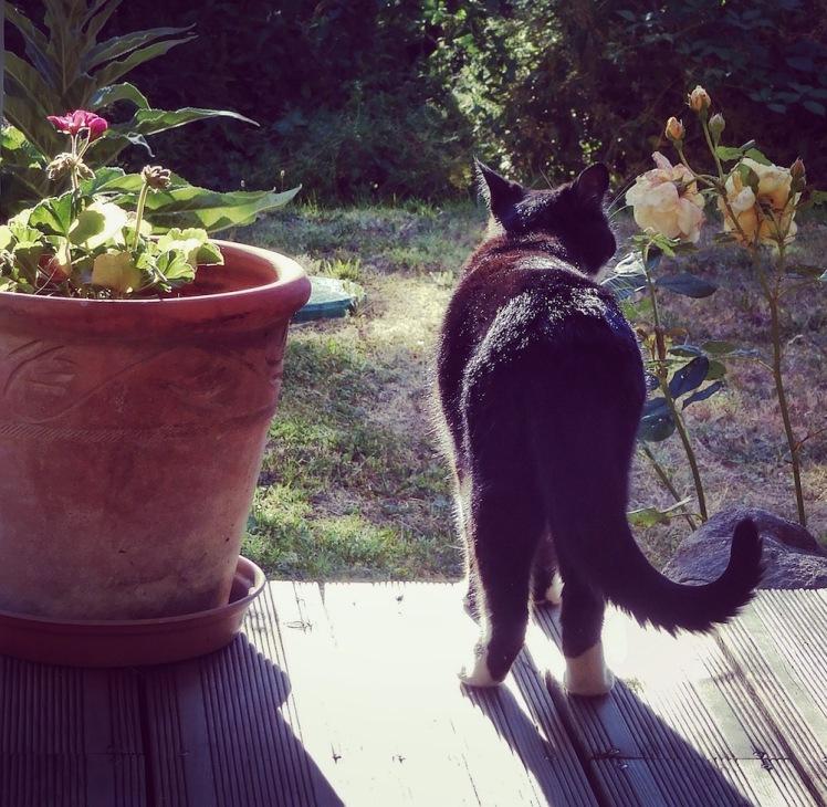 sophie enjoying the evening sunshine