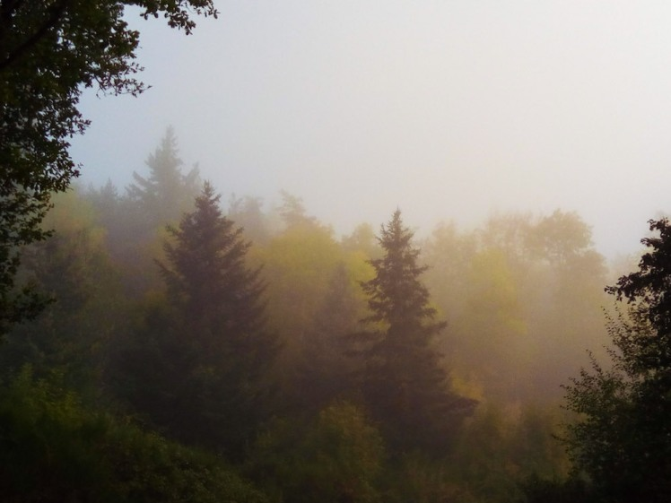 woods near Grahy in the morning mist