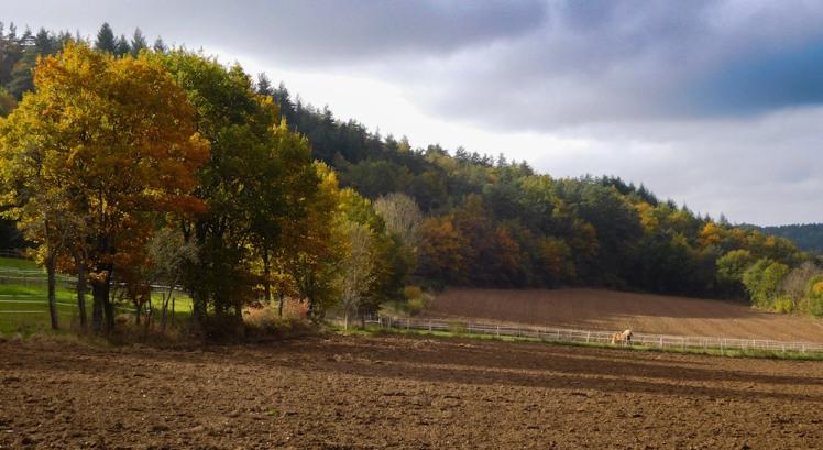 autumn landscape, blannat